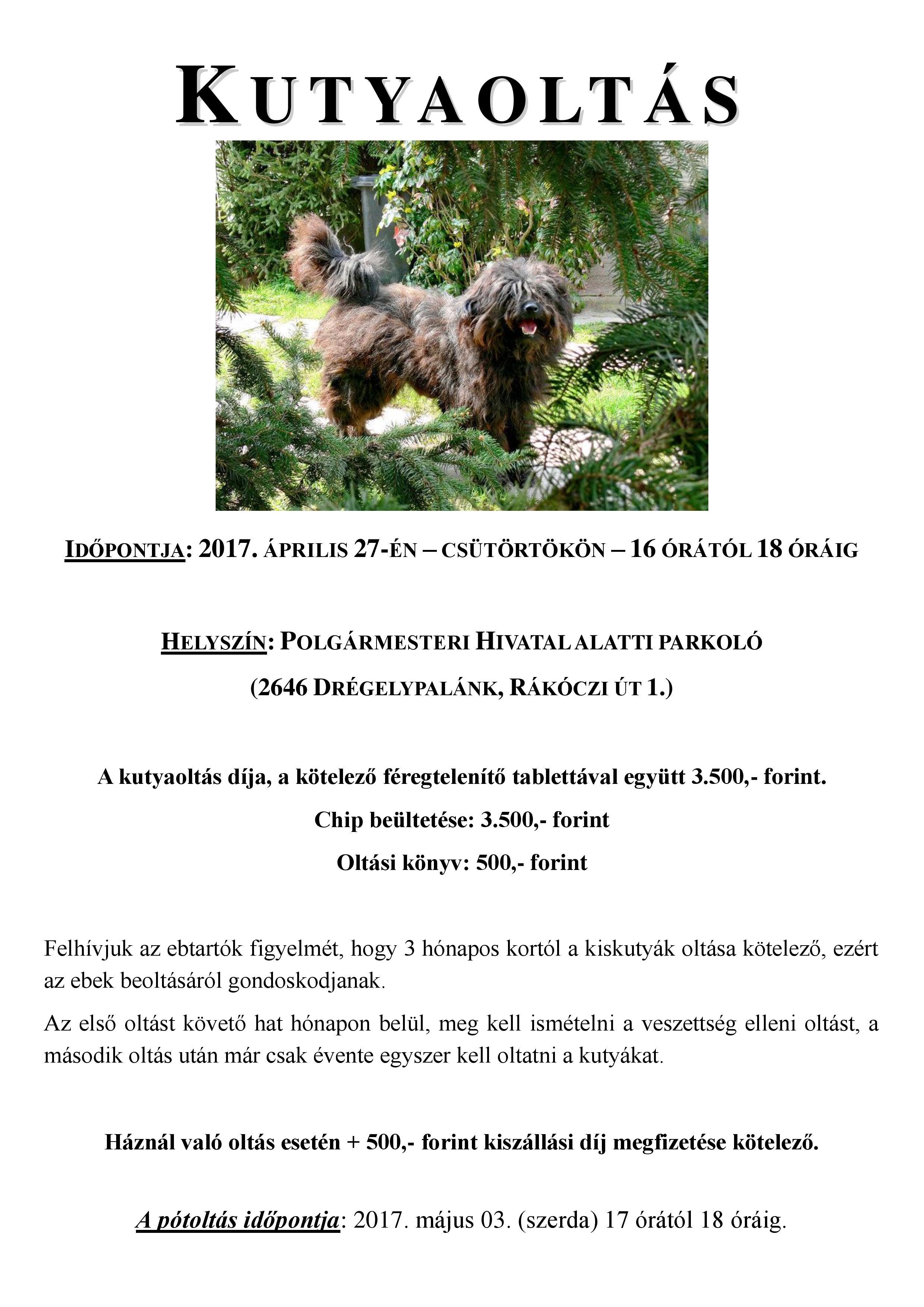 Kutyaoltás plakát-page-001